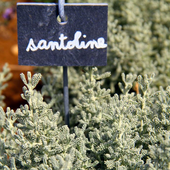 ecrevisse-Santoline